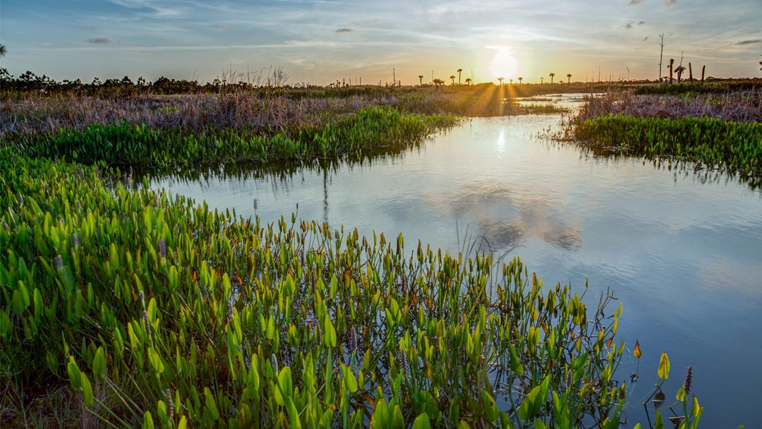 View beautiful Viera sunrise from your custom built home